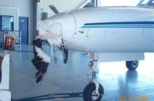 Birds Vs Aircrafts Crazy Pictures