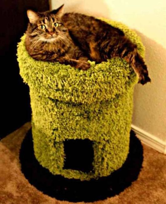 Creative Cat Houses Collection