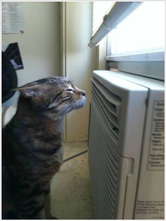 Hot Summers Funny Pictures