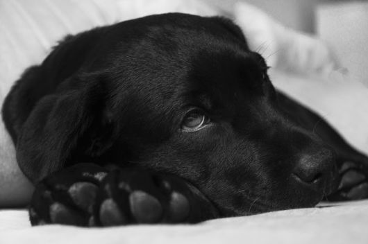 Warning Signs That Your Pet Is Sick