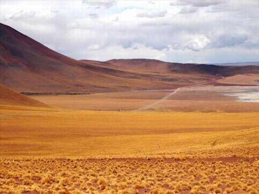 The Incredible Desert Flowers Of Atacama