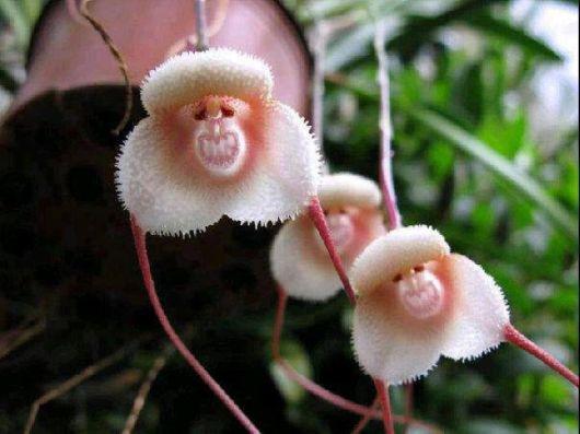 Rare Natural Blooming Flowers