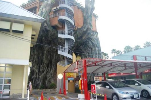Amazing Japanese Banyan Tree Top Restaurant
