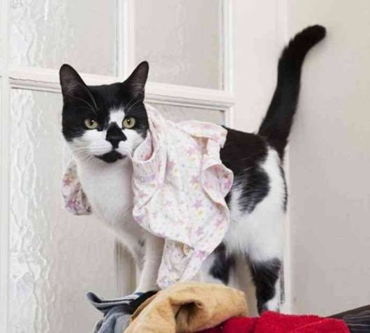 The Real Thief Cat