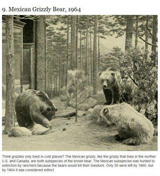 The Extinct Animals Since 1960s