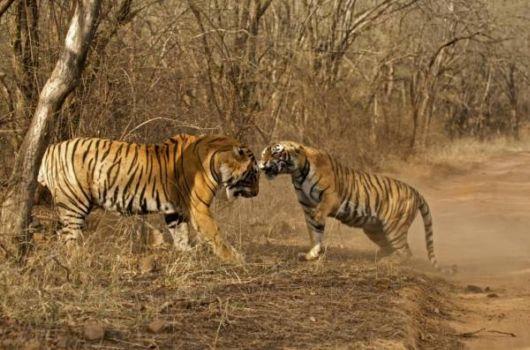 The Wildlife Sanctuaries In India